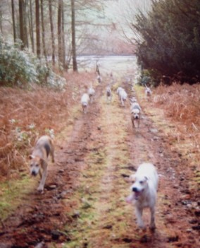 Hounds know best - coming to sabs with huntsman nowhere in sight!