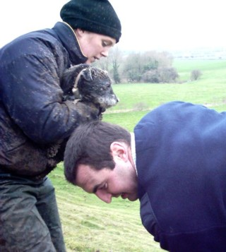 The terrier, held by terrierman's assistant, about to be introduced to the fox's refuge